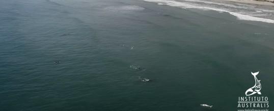 Temporada 2018 já registra número de baleias-franca superior à média dos últimos 3 anos
